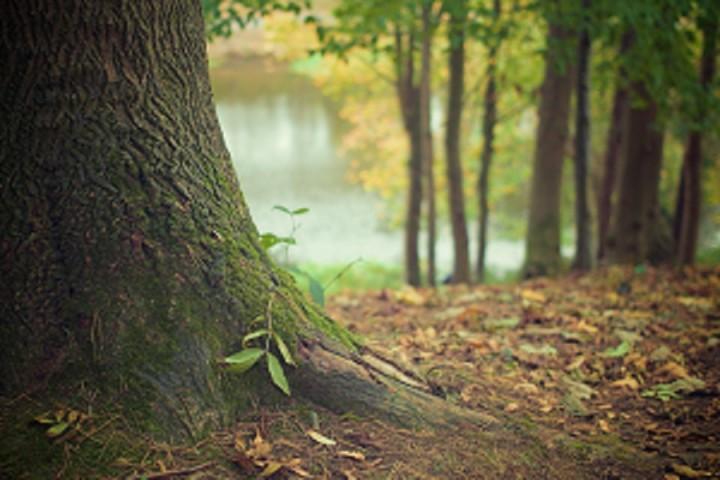 drzewo - żaluzje drewniane Kraków