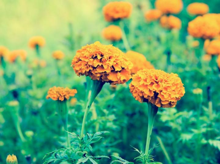 Kwiaty - gazetka Biedronka.