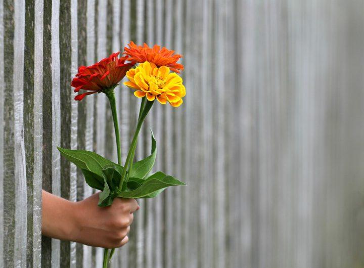 Kwiaty. Gazetka Biedronka. Ceneo