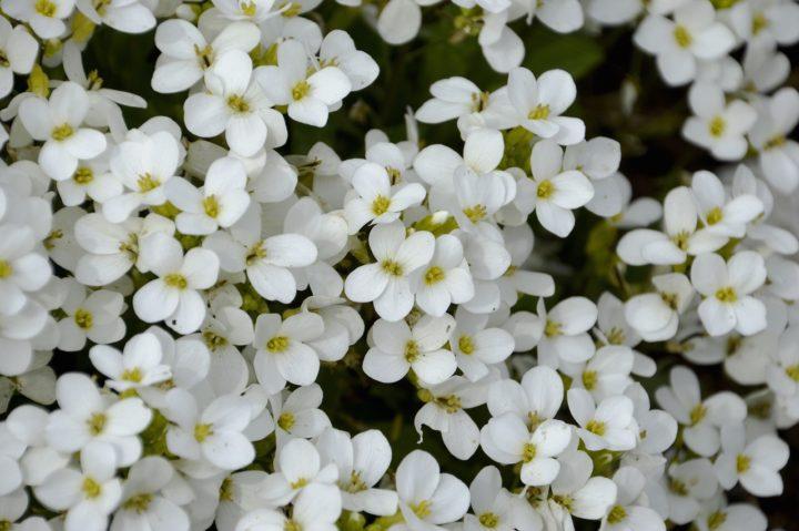 projektowanie-pachnacego-ogrodu-od-czego-zaczac-kwiaty