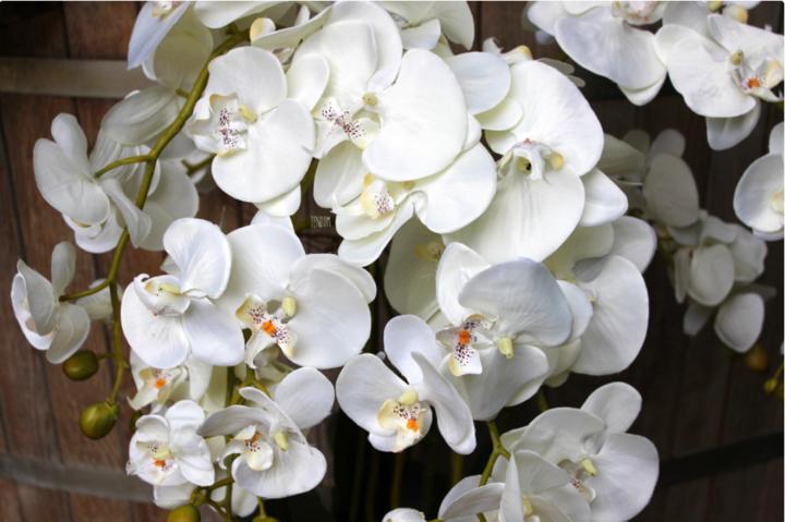 storczyk w dużej donicy - zbliżenie na kwiaty