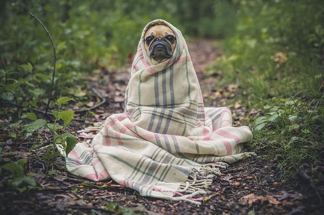 poducha dla psa zapewni komfort