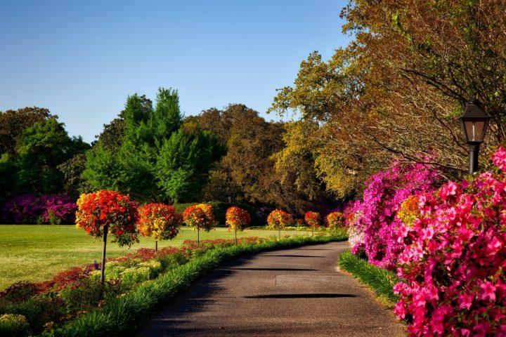 Zdjęcie przedstawia pachnący ogród