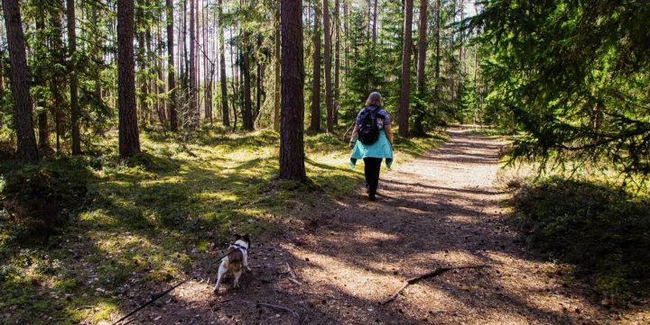 Buty trekkingowe damskie - najważniejszy element wyposażenia w góry