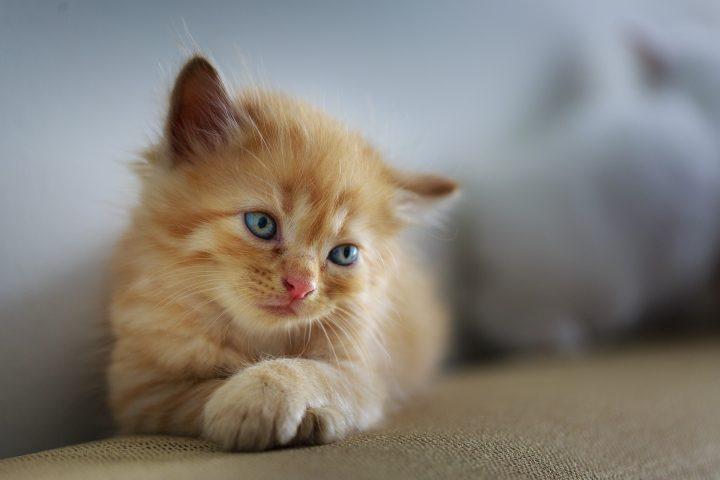 kuweta bez ramki dla kota