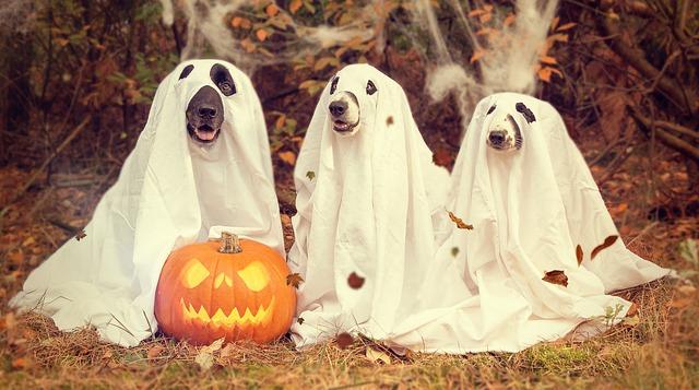 pyszne wypieki na halloween