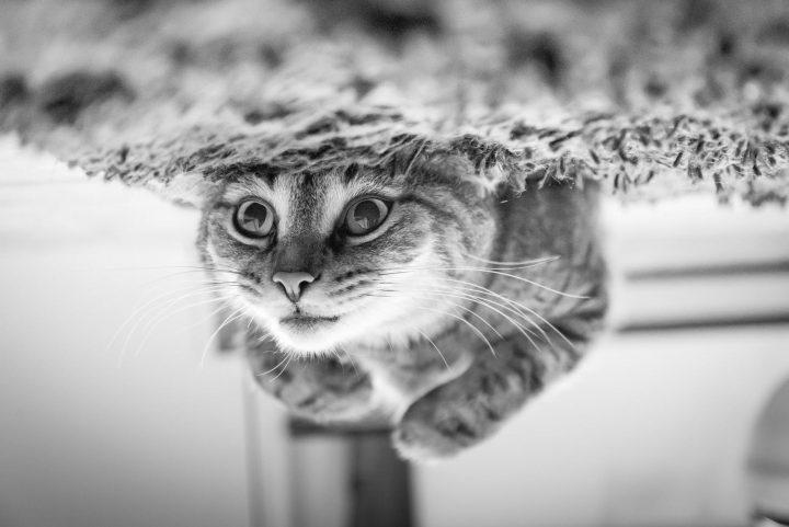 Drapaki dla kota sprawią zwierzakom wiele radości