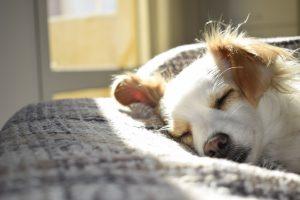 jak nauczyć psa spania w legowisku
