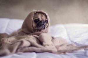 czy ubranko dla psa jest konieczne ? Czy psiaki nie marzną zimą ? sprawdzmy