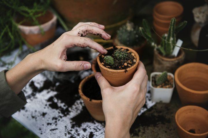 Donice do ogrodu pięknie wyeksponują Twoje rośliny