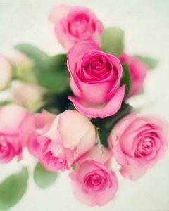 tkanina w róże to inspiracja naturą
