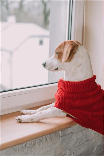 czy ubranko dla psa jest konieczne