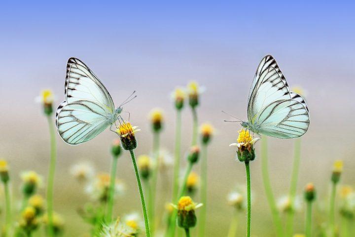 ogród i motyle