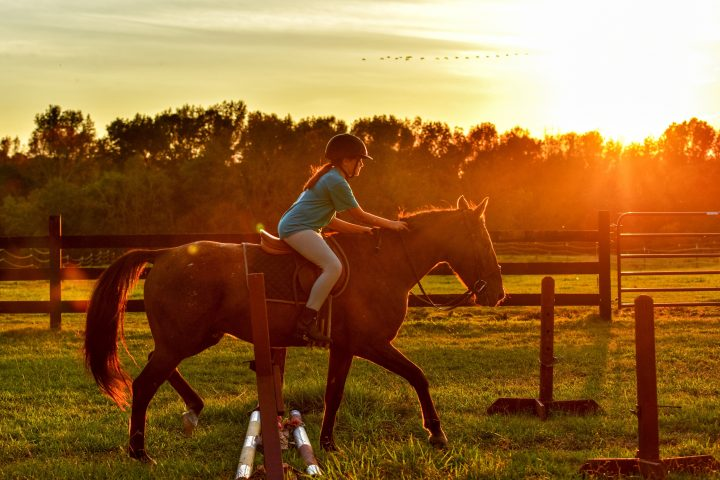 musli-dla-koni