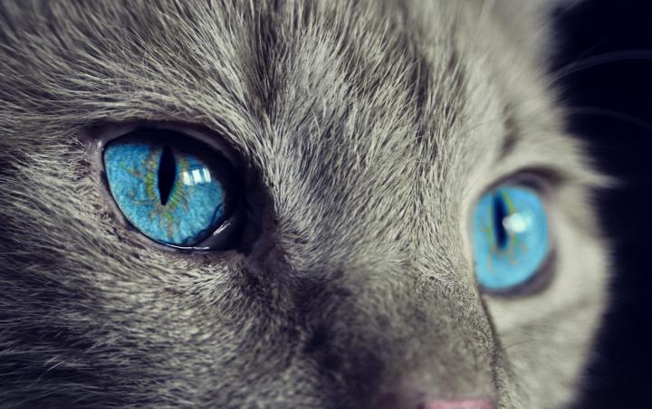 sklep zoologiczny online - kot