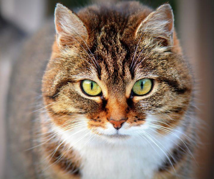 obroże dla kotów