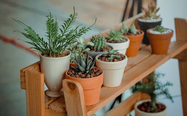 Drewniane doniczki świetnie sprawdzą się w mieszkaniu i biurze