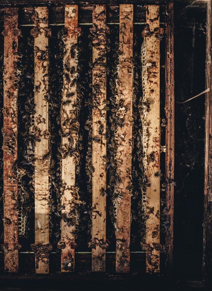 żelowanie szkodników warszawa